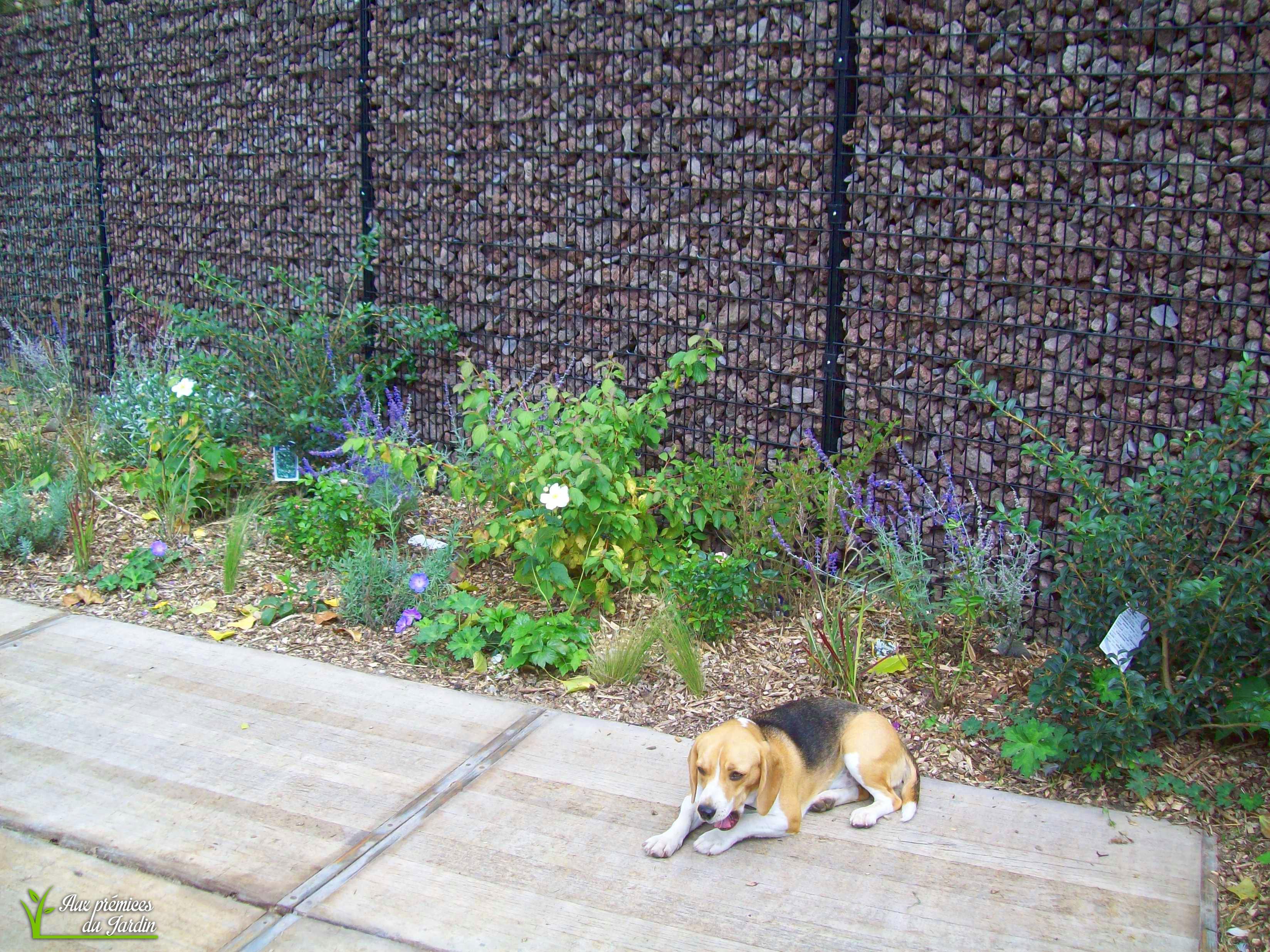 Jardin contemporain - Aux Prémices du Jardin