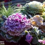 Aux prémices du jardin potée hivernale